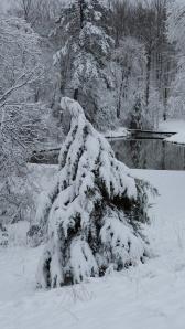 Snowy cape